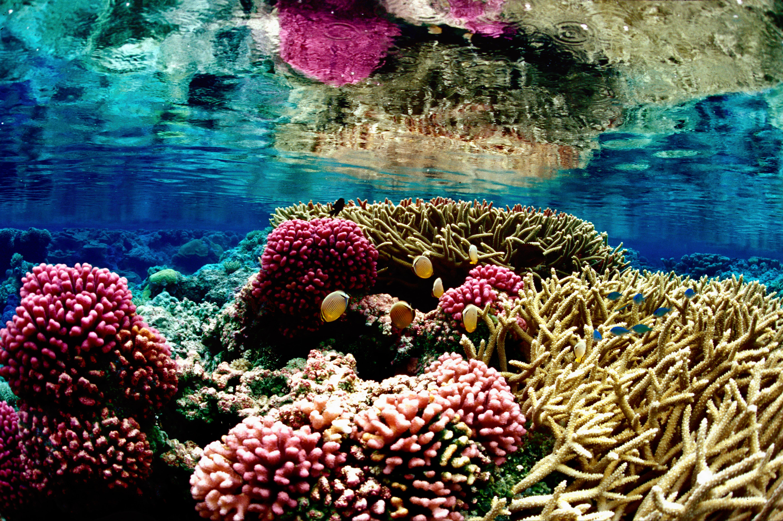Oceans – Questionable Evolution