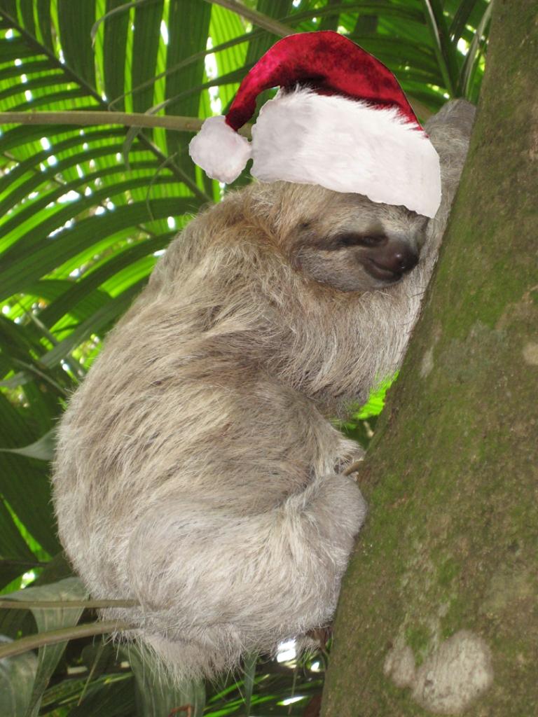 Christmas Sloth.Sloth Christmas Questionable Evolution