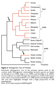 Phylo tree image