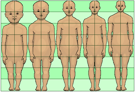 human_development_neoteny_body_and_head_proportions_pedomorphy_maturation_aging_growth